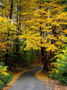 autumn-744270_1280